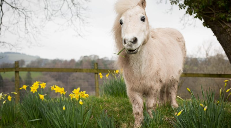 Lluest Horse and Pony Sanctuary